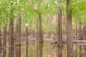 Floodwaters cover a bottomland hardwood forest near Deep Slough on Felsenthal National Wildlife Refuge.